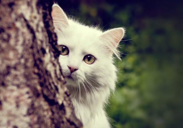 Storia del gatto