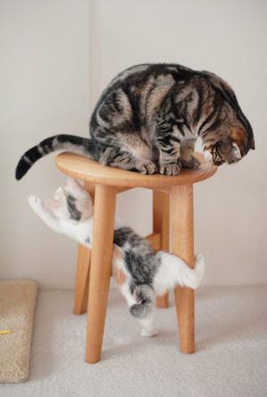 Comprendere meglio il proprio gatto guardando la sua coda for La coda del gatto