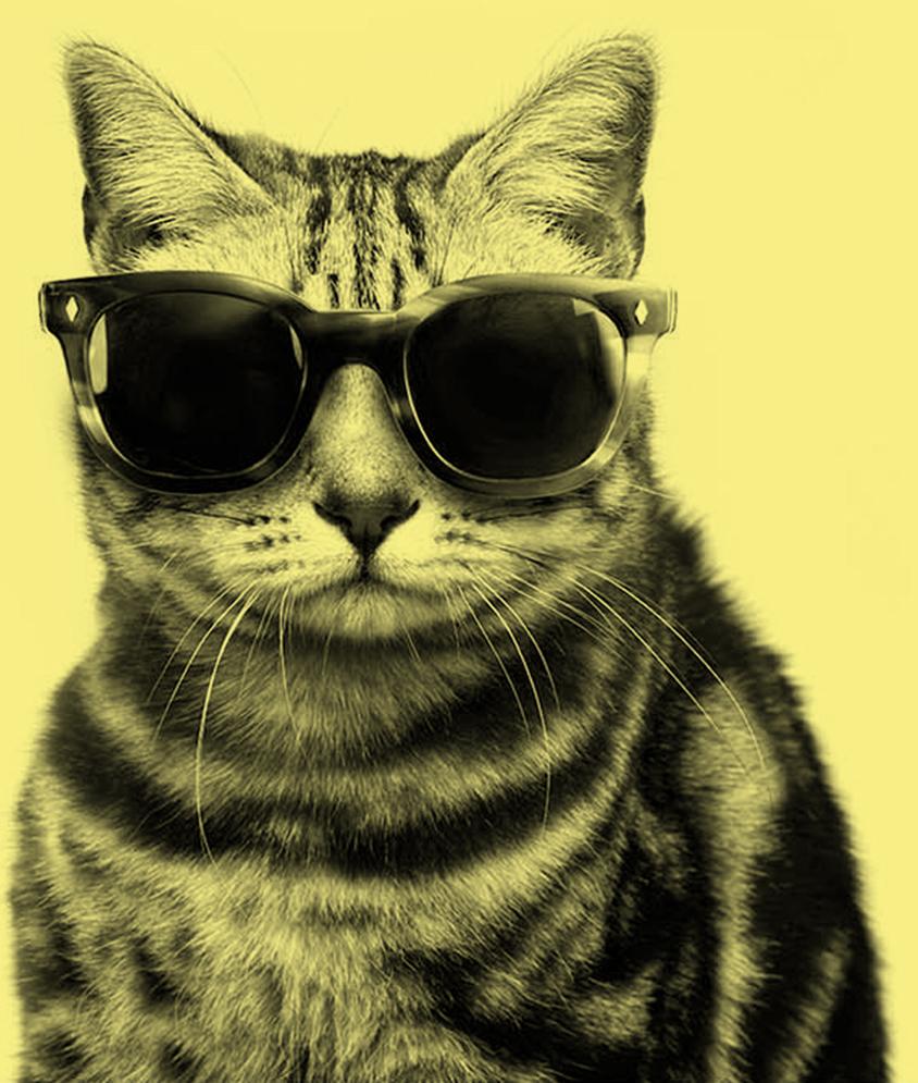 lidocat-gatto