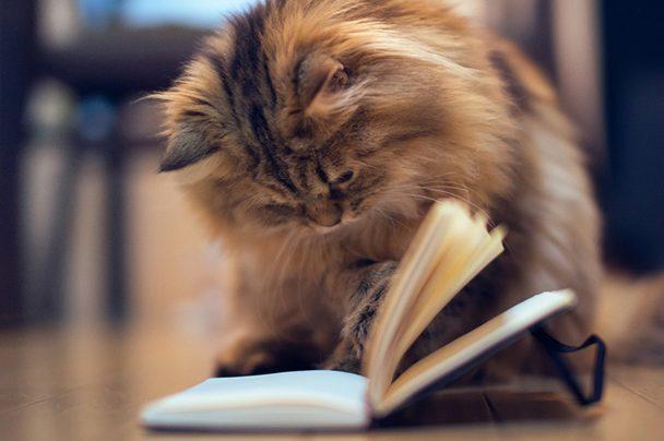 Cat Books