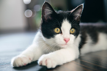 Insegniamo Al Nostro Gatto Ad Usare La Lettiera Lindocat