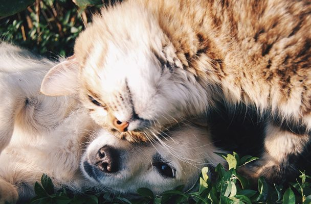 cane gatto natura ecologia